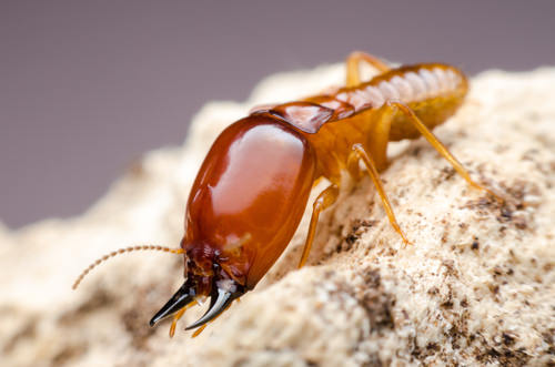 termites chalon sur saone